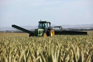 Impulso inesperado al sector ecológico español